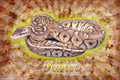 Burst Series Wallpaper - Ball Python Pewter Morph